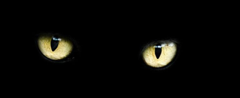 Episode 17 – Corporate Superstition